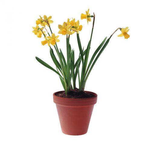 цветок в горшочк
