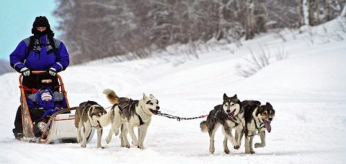 Катание на собачьей упряжке