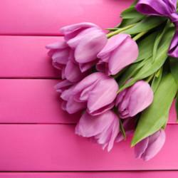 Цветок в горшке или букет: что выбрать?